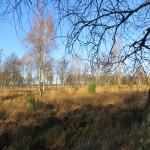 2012 - Boswachterij Dwingeloo 2