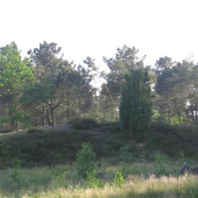 Stevensbergen